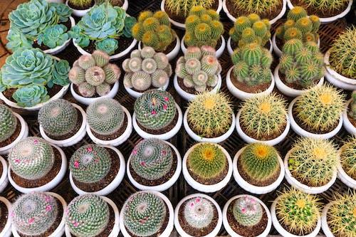 Darmowe zdjęcie z galerii z flora, kaktus, kolczasty, martwa natura