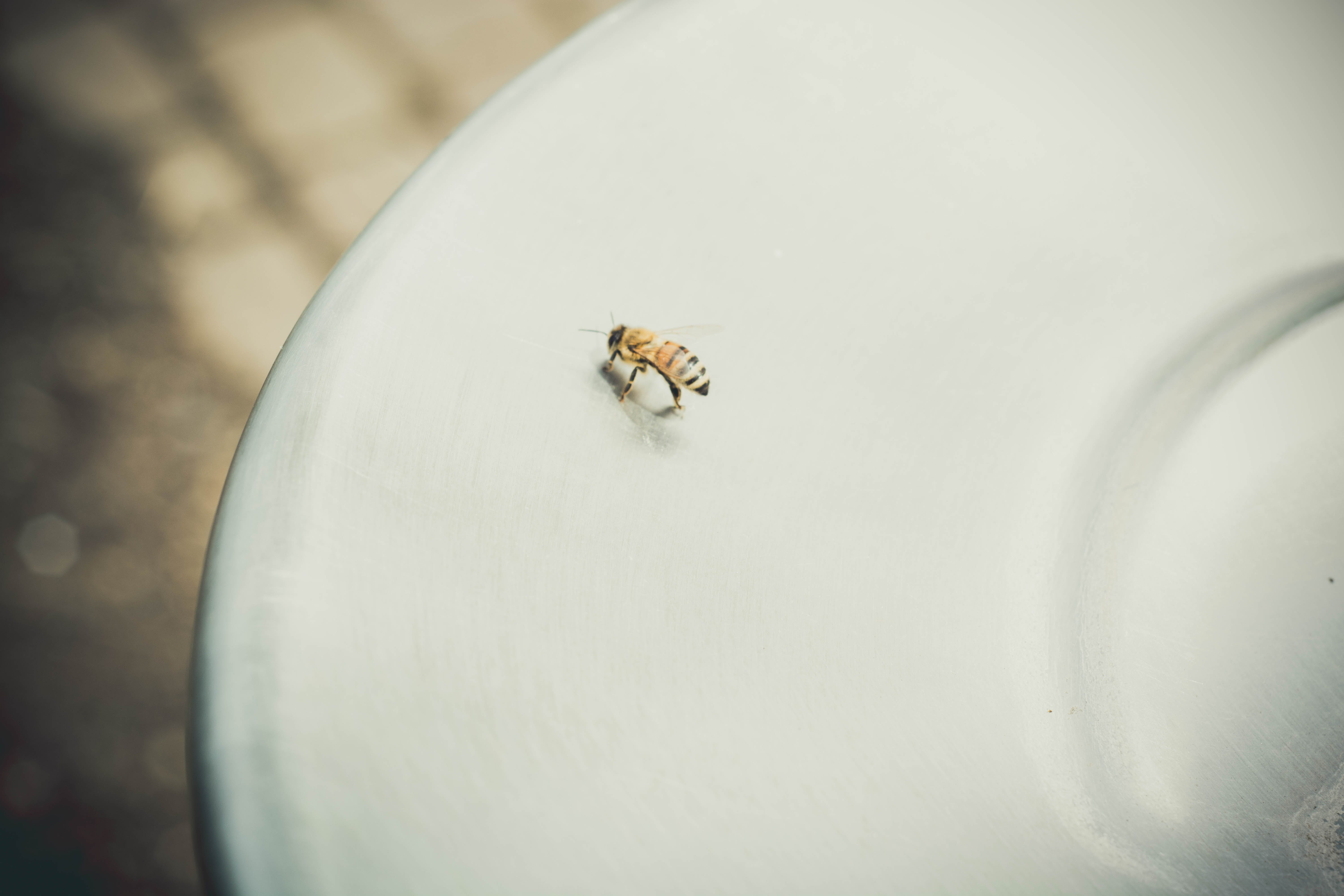 Honeybee on White Surface