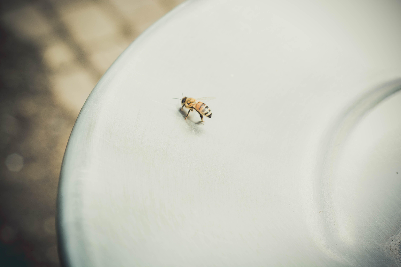 Foto stok gratis berbayang, binatang, cahaya, lebah