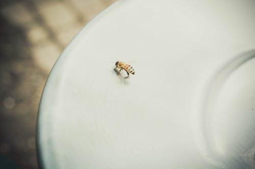 Gratis lagerfoto af bi, close-up, dyr, insekt