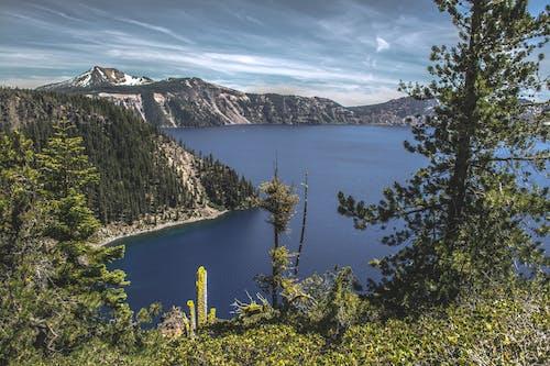 Immagine gratuita di acqua, alberi, boschi, cielo