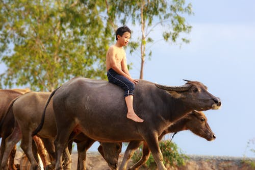Ảnh lưu trữ miễn phí về ánh sáng ban ngày, chăn nuôi, con trai, con vật