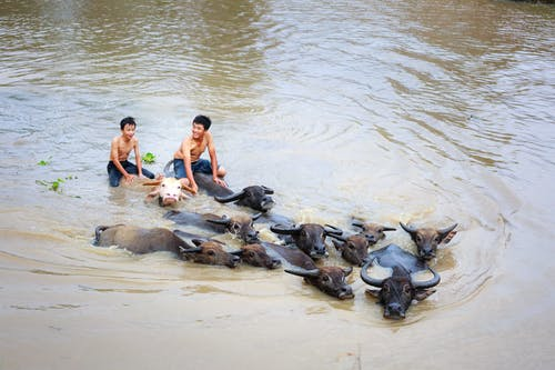 Imagine de stoc gratuită din animale, apă, apă curgătoare, băieți