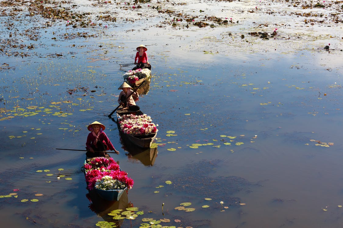 acqua, ambiente, barca a remi