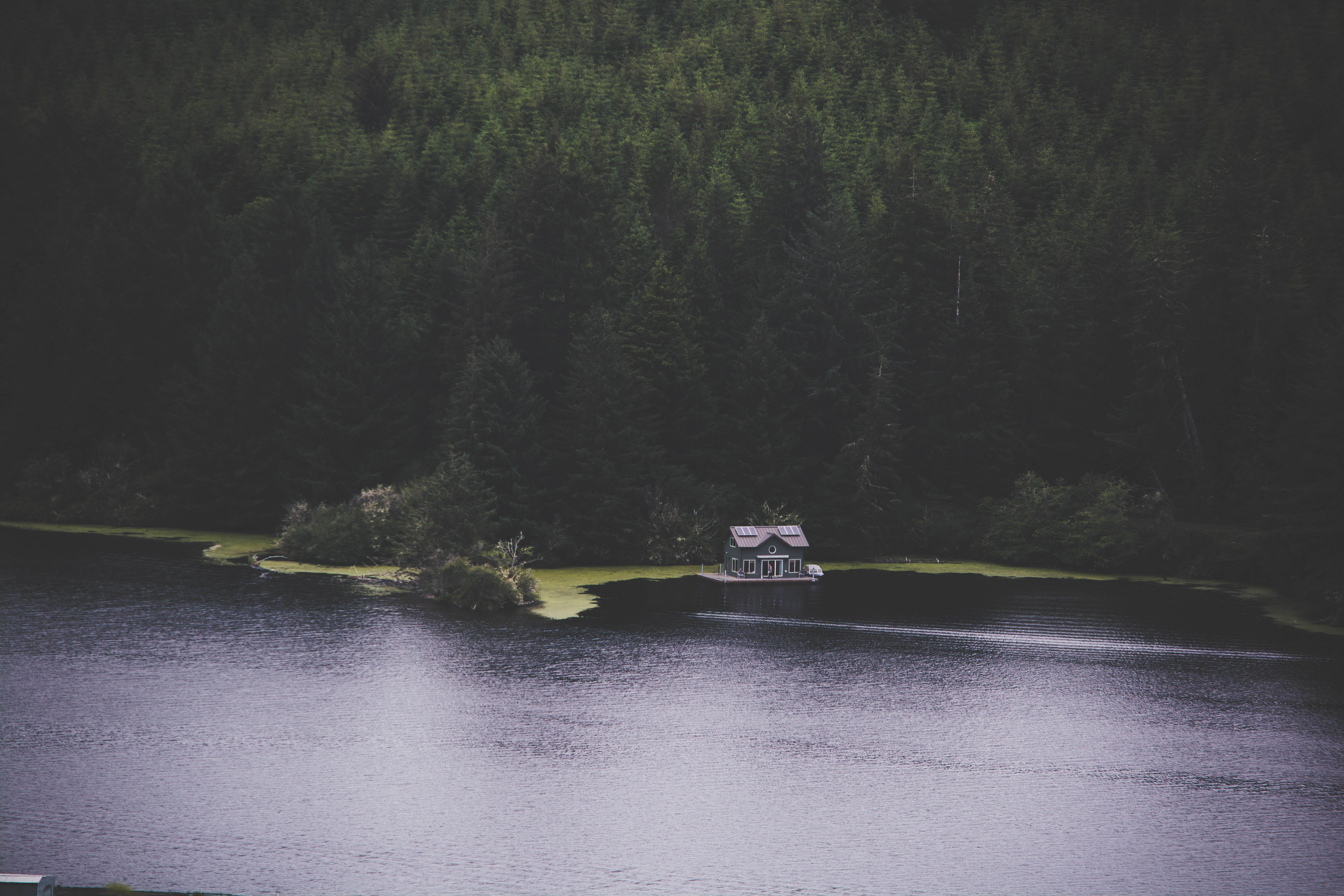 Cabin Near Pine Trees and Surrounded by Water