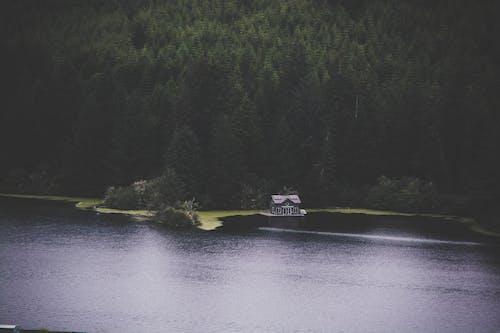 Бесплатное стоковое фото с вода, деревья, дневной свет, дом