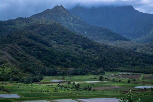 Fotobanka sbezplatnými fotkami na tému denné svetlo, farma, hory, hracie polia