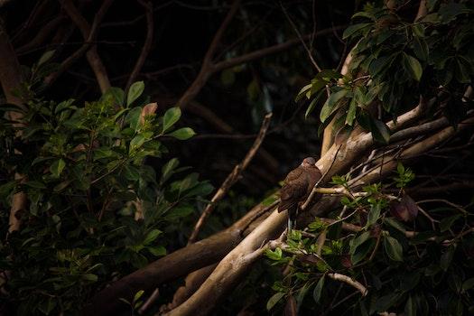Free stock photo of nature, bird, dark, trees