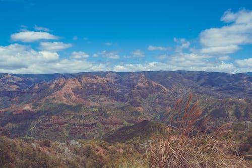 Ingyenes stockfotó domb, ég, erdő, fák témában