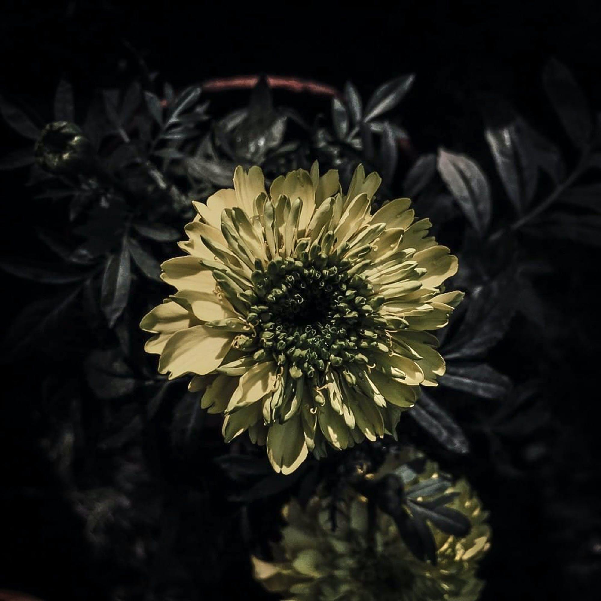 Безкоштовне стокове фото на тему «#beauty, #flowers, #nature, #outdoorchallenge»