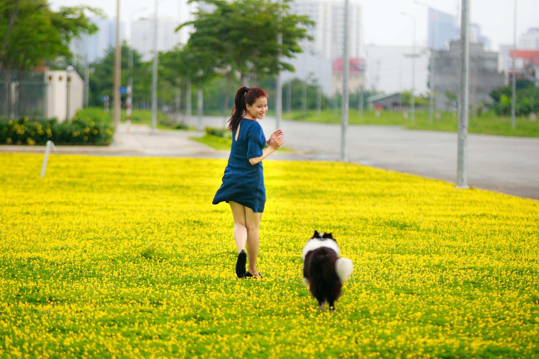 Immagine gratuita di adulto, animale domestico, campo, cane