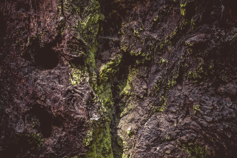 Mossy rocks, outdoors, pattern