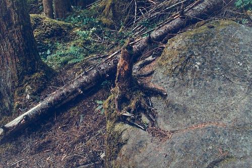 Безкоштовне стокове фото на тему «Денне світло, дерева, камінь, катастрофа»