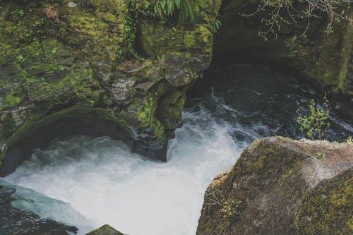 Kostnadsfri bild av bäck, berg, dagsljus, grenar
