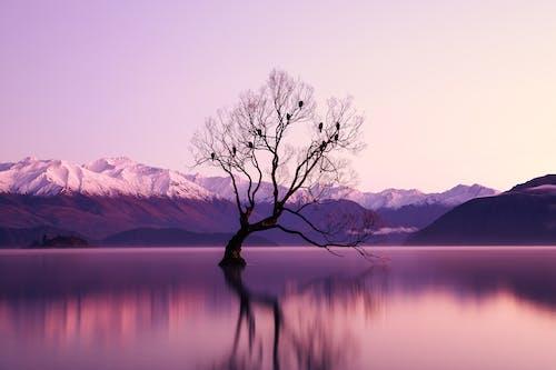 被水體包圍的黑色枯樹