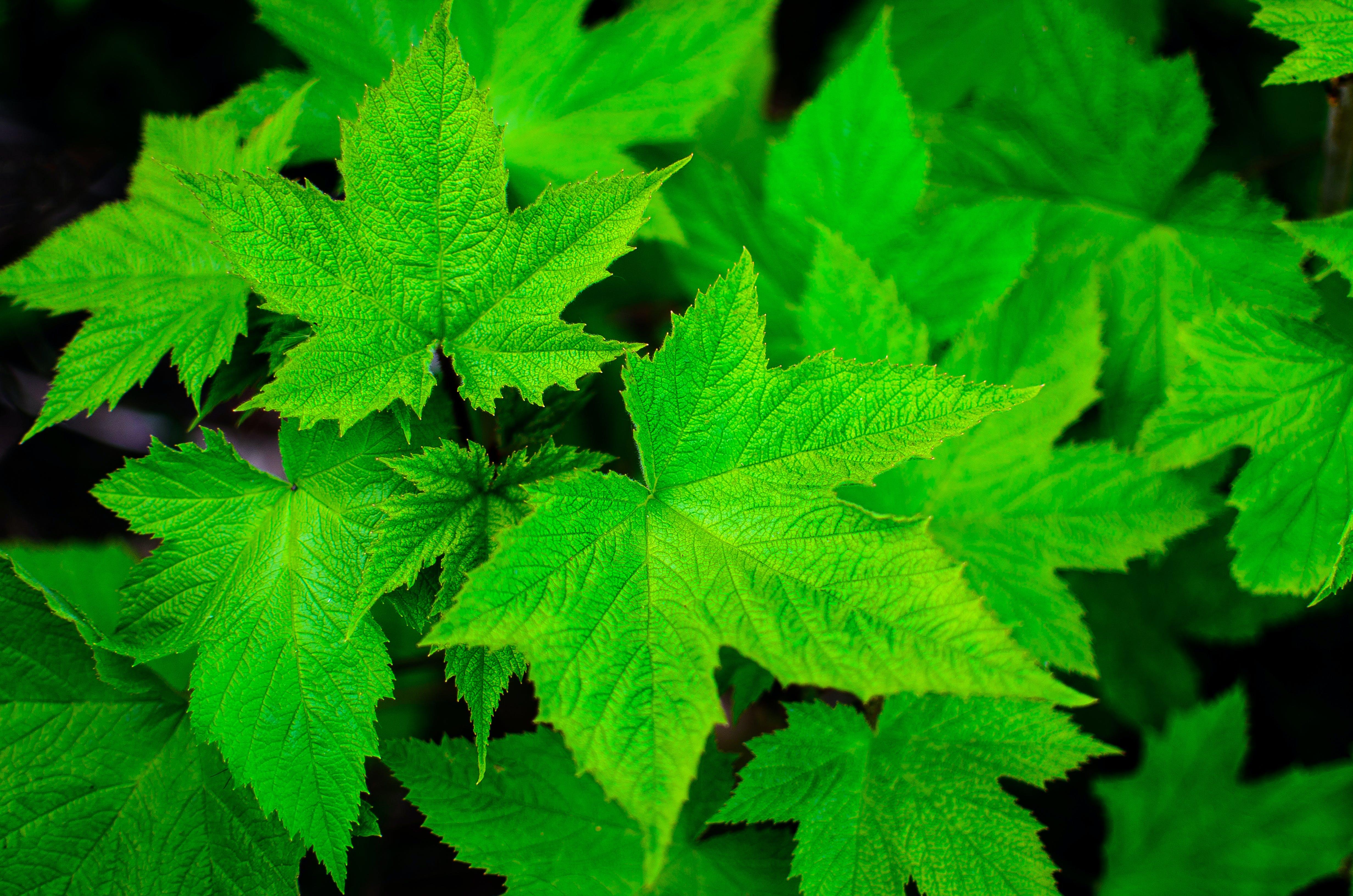 grøn, natur, nærbillede