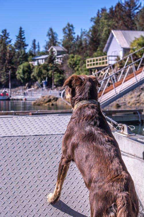 かわいらしい, ペット, ボート, 動物の無料の写真素材