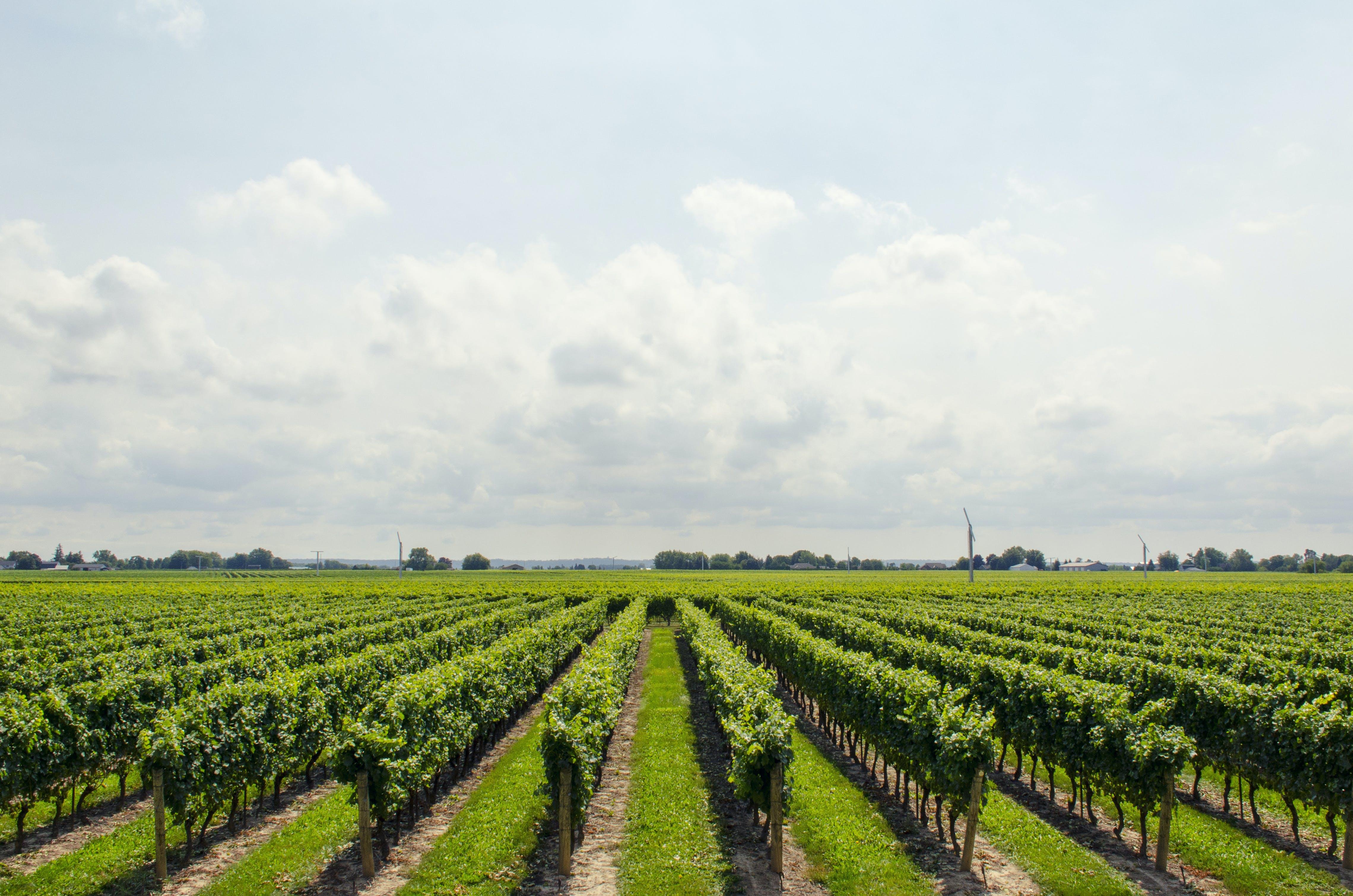 bauernhof, farm, himmel
