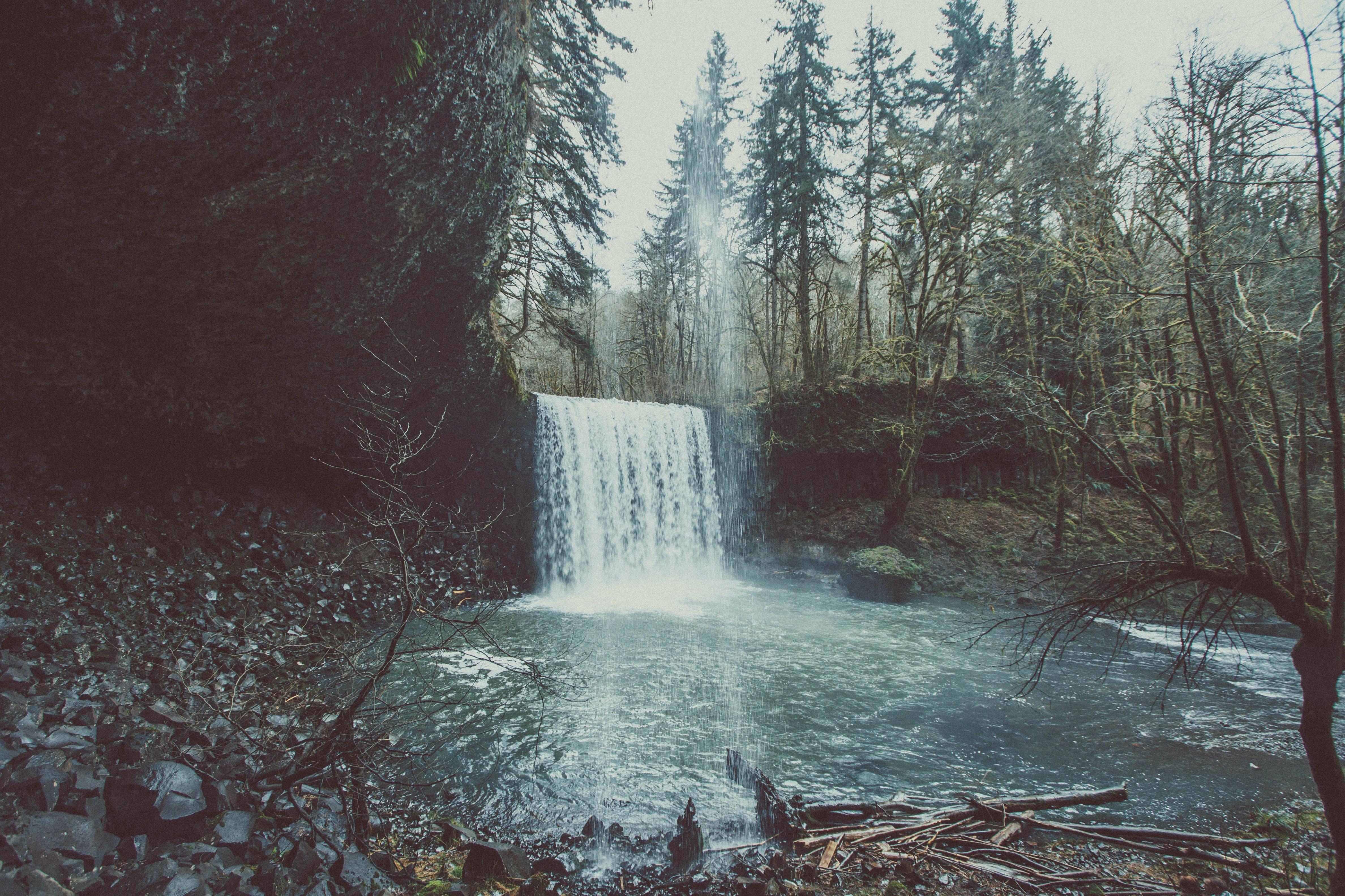 conifers, flowing, lake