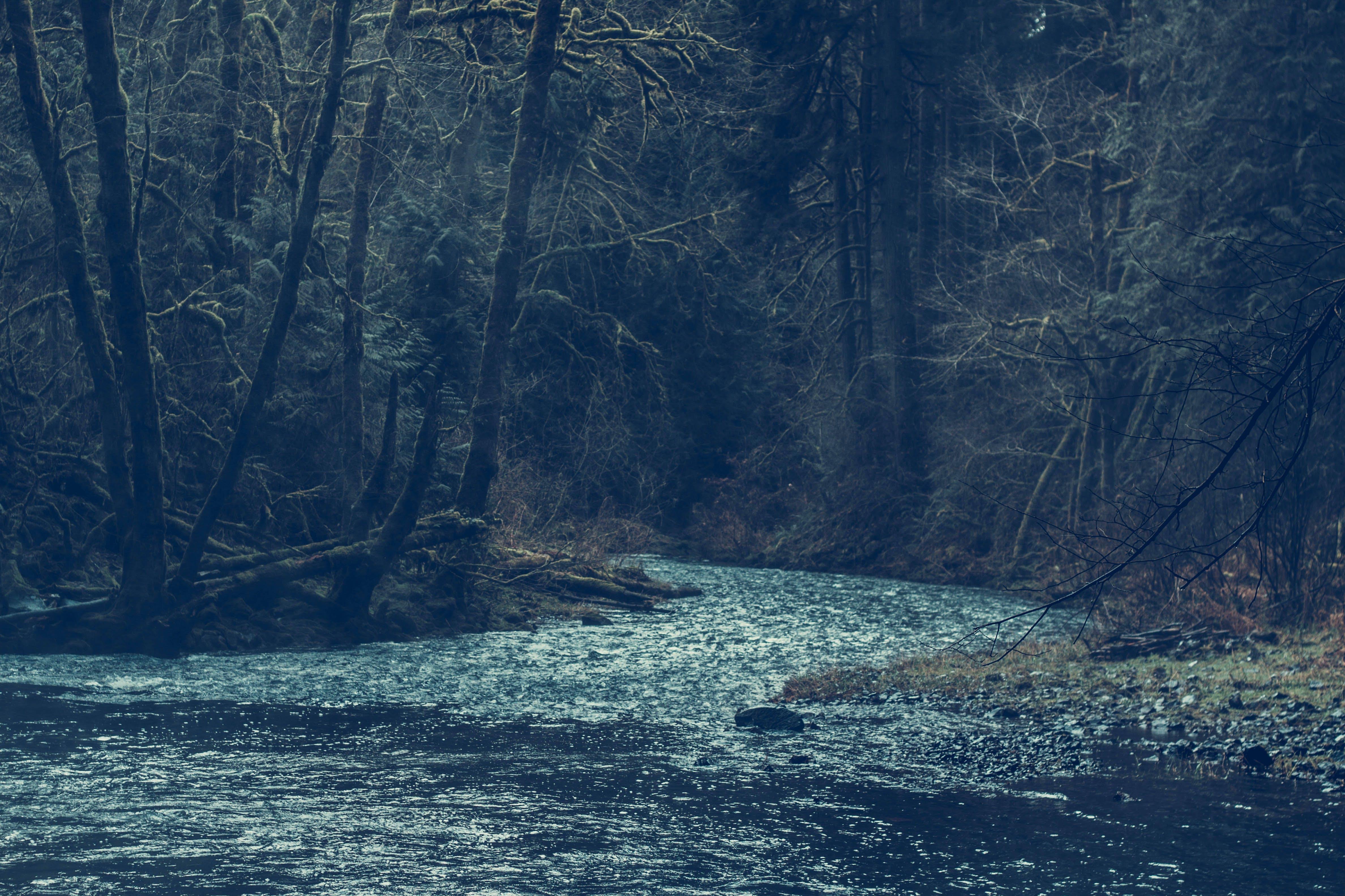 Бесплатное стоковое фото с вода, гора, деревья, дневной свет