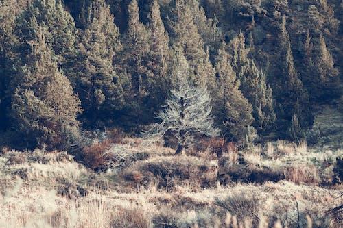 Photos gratuites de arbres, aube, bois, caillou