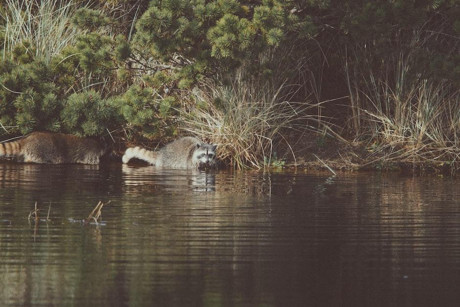 animal, lake, outdoors