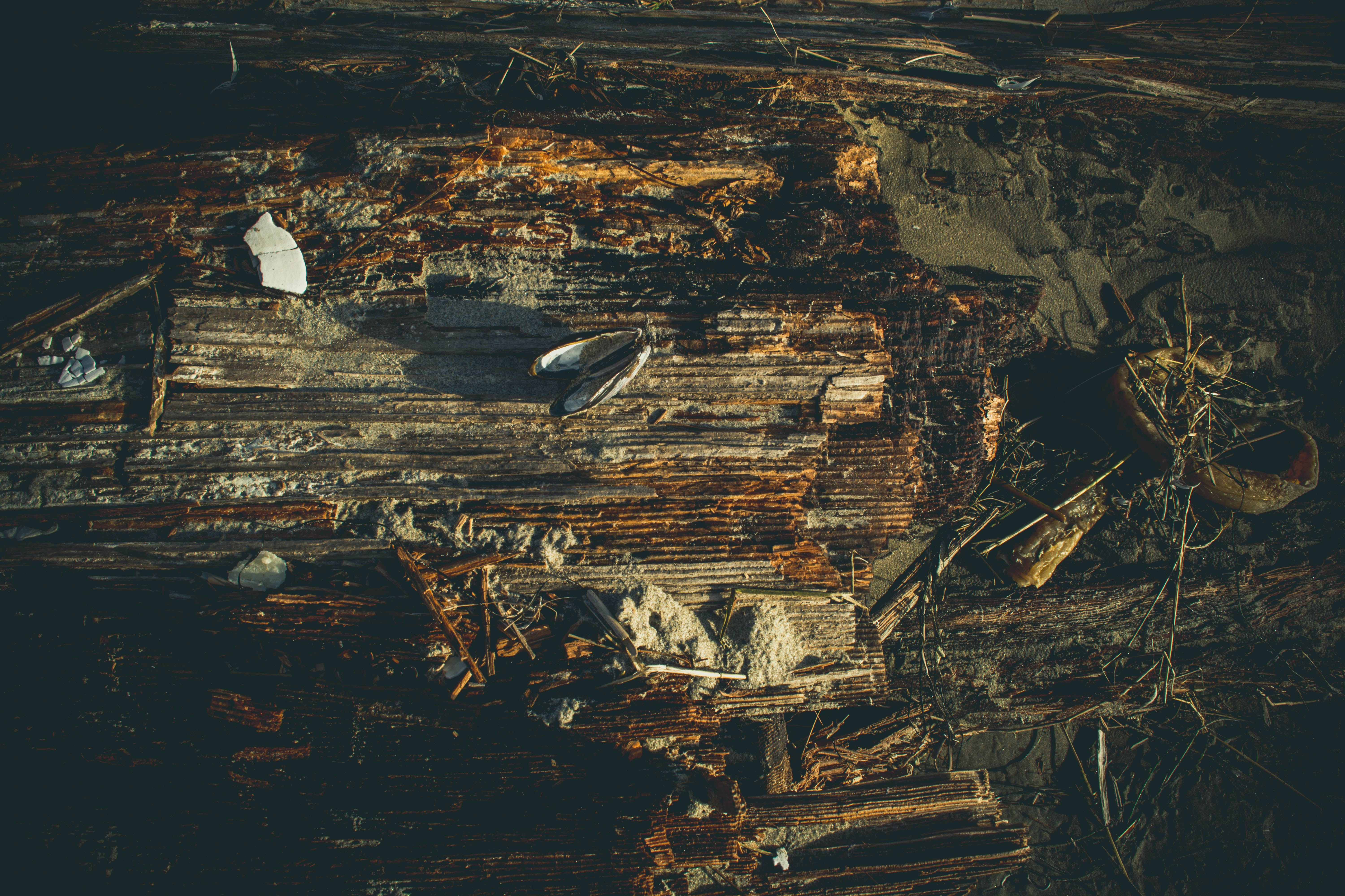 Flat Lay Photography of Winged Insect on Rotten Wood