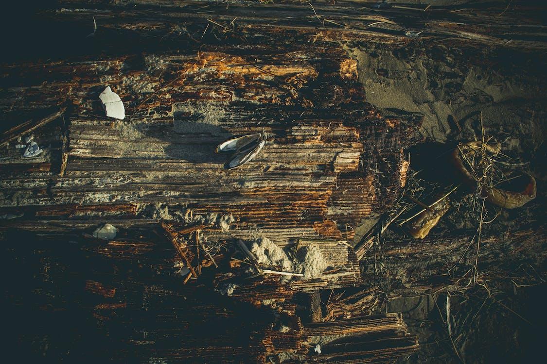dřevo, hmyz, lehký