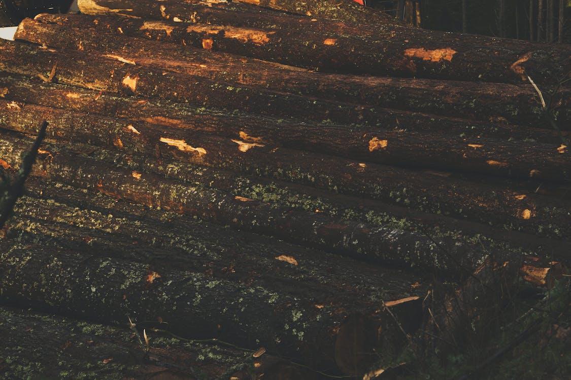 дерев'яні колоди, Деревина, колоди