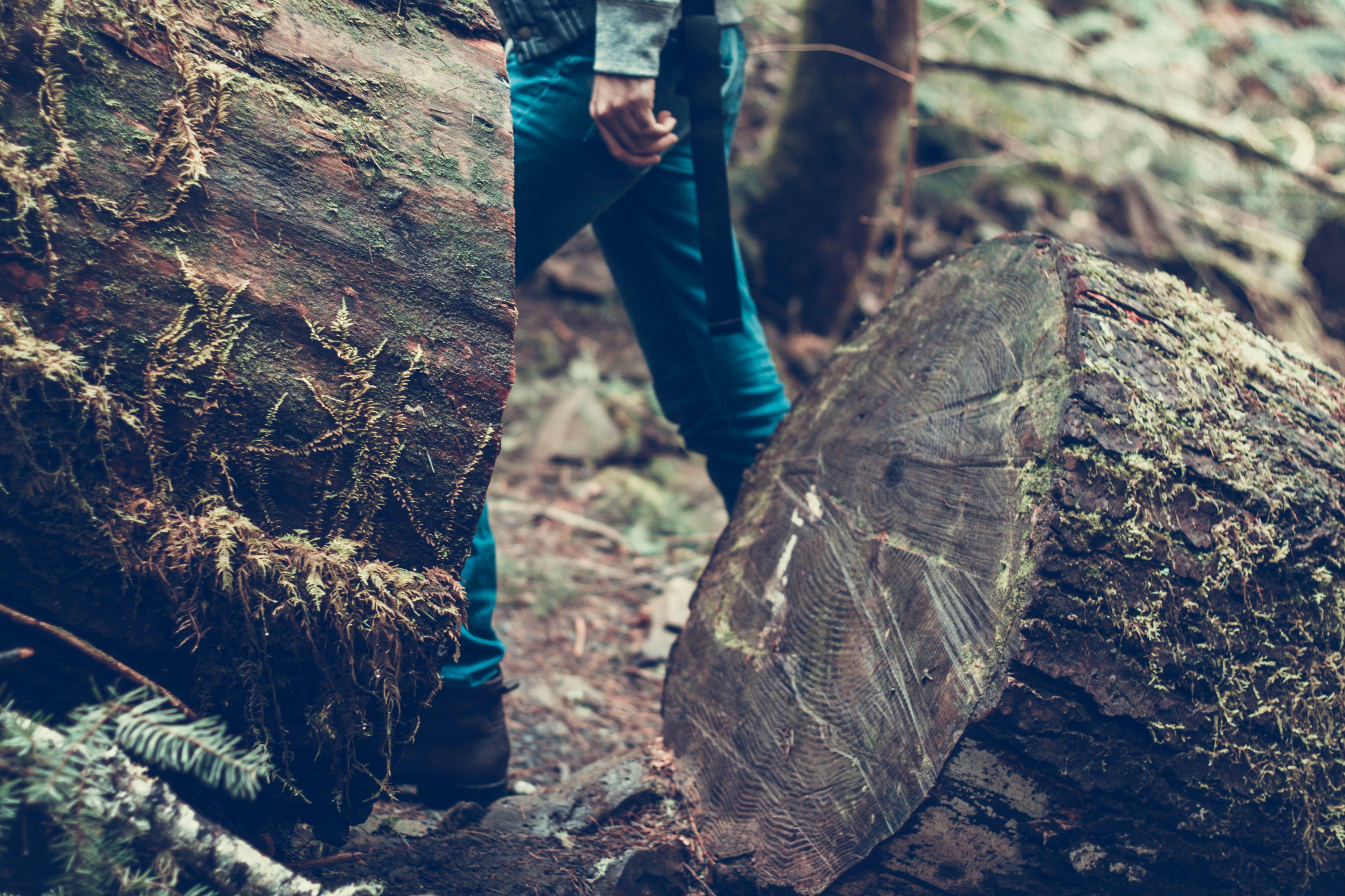 Ảnh lưu trữ miễn phí về cận cảnh, cây, chặt đốn thành từng khúc, gỗ