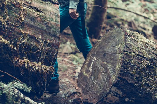 Person Walks Beside Wood Log