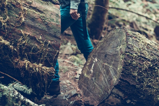 Free stock photo of wood, tree, outdoors, close-up