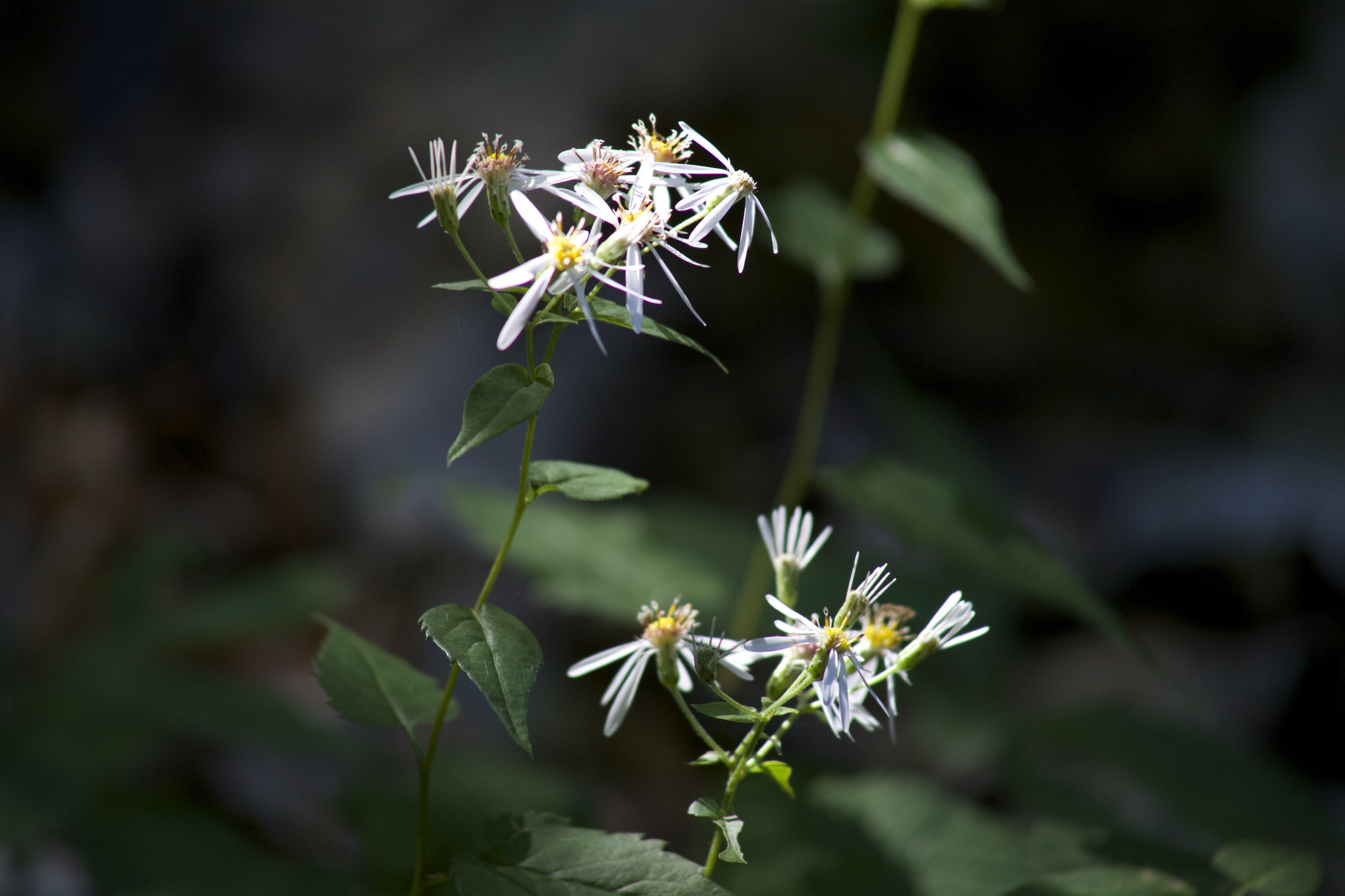 closeup, flower, flowers