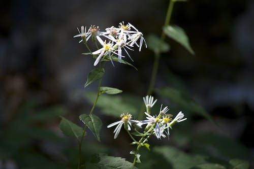 Foto stok gratis bunga, bunga-bunga, jarak dekat