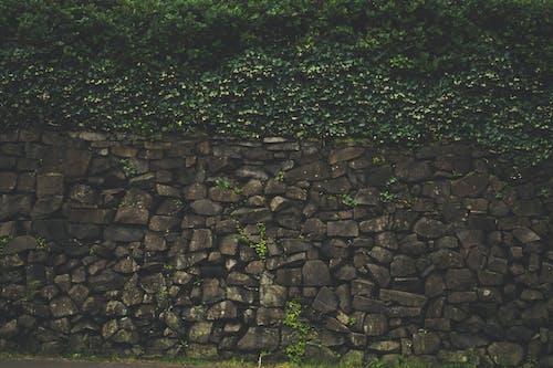Základová fotografie zdarma na téma břečťan, kameny, mech, rostliny