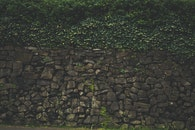 rocks, wall, moss