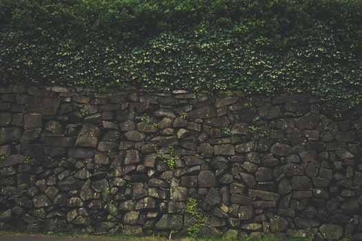 Free stock photo of rocks, wall, moss, plants