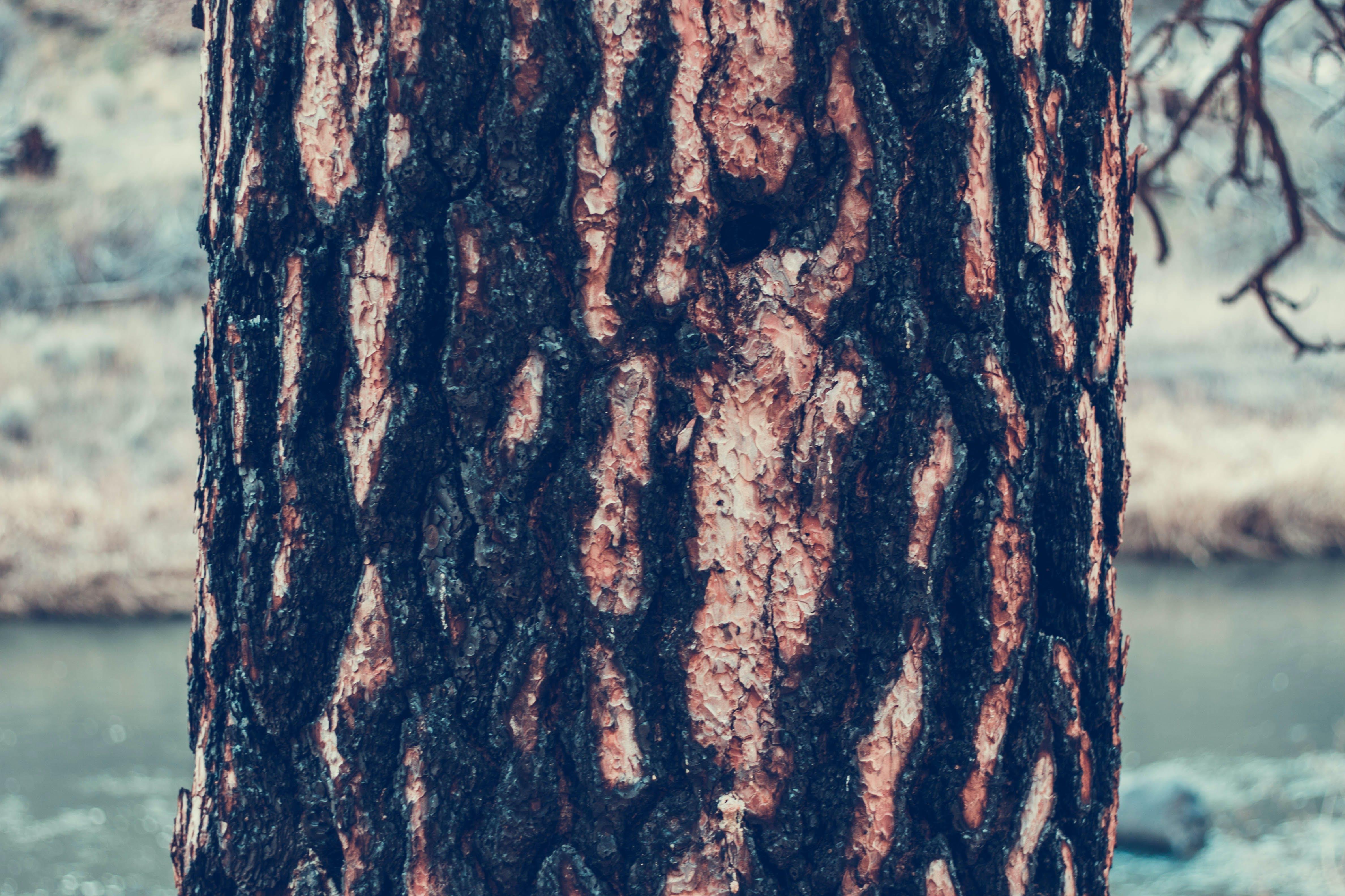Gratis lagerfoto af bark, close-up, ru, tekstur