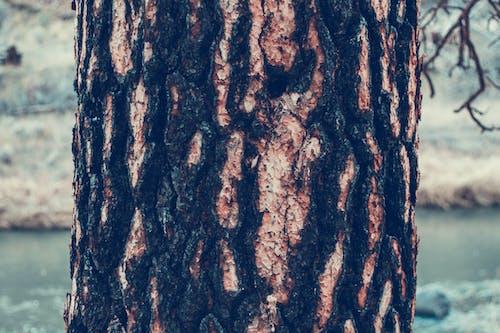 Ilmainen kuvapankkikuva tunnisteilla karhea, kuiva, lähikuva, puu