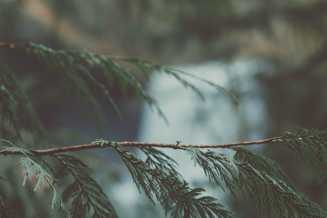 arbre, aube, branche