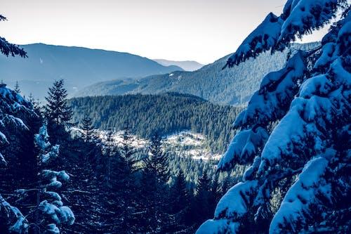 コールド, 冬, 山, 木の無料の写真素材