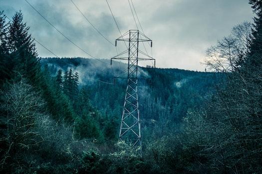 Kostenloses Stock Foto zu wald, bäume, elektrizität, holz
