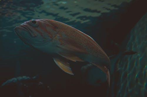 Безкоштовне стокове фото на тему «вода, під водою, плавання, риба»