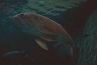 water, animal, swimming