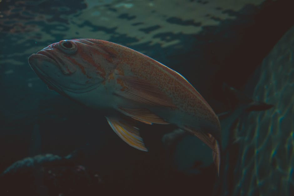 New free stock photo of water, animal, swimming