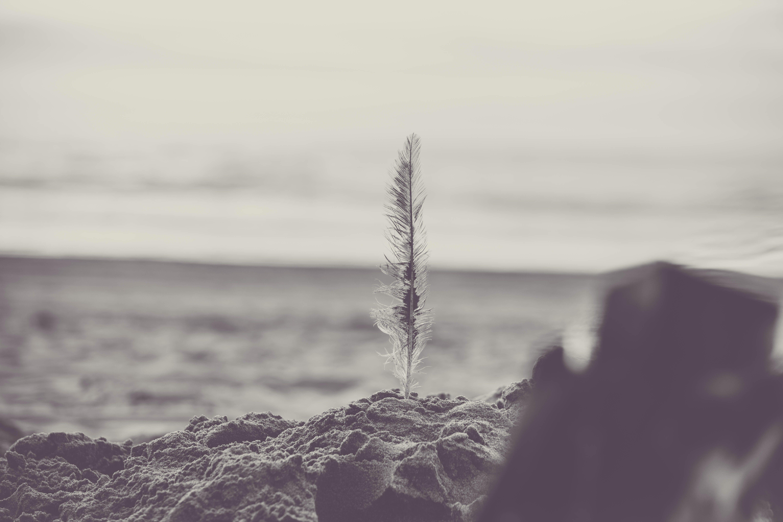 beach, black-and-white, close-up
