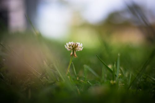 Photos gratuites de belle fleur, fleurs, herbe