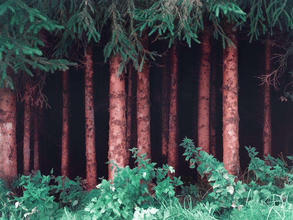 4k wallpaper, bäume, baumstämme