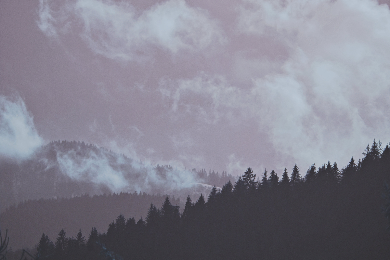 คลังภาพถ่ายฟรี ของ กลางแจ้ง, ซิลูเอตต์, ต้นไม้, ท้องฟ้า