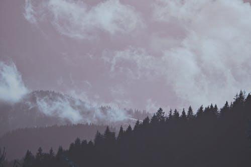 Ảnh lưu trữ miễn phí về ảm đạm, bầu trời, bóng, cây